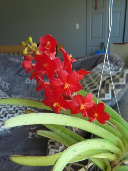 Les orchidées chez Grigri à partir de 2020 - Page 8 Img_2098