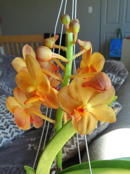Les orchidées chez Grigri à partir de 2020 - Page 8 Img_2099