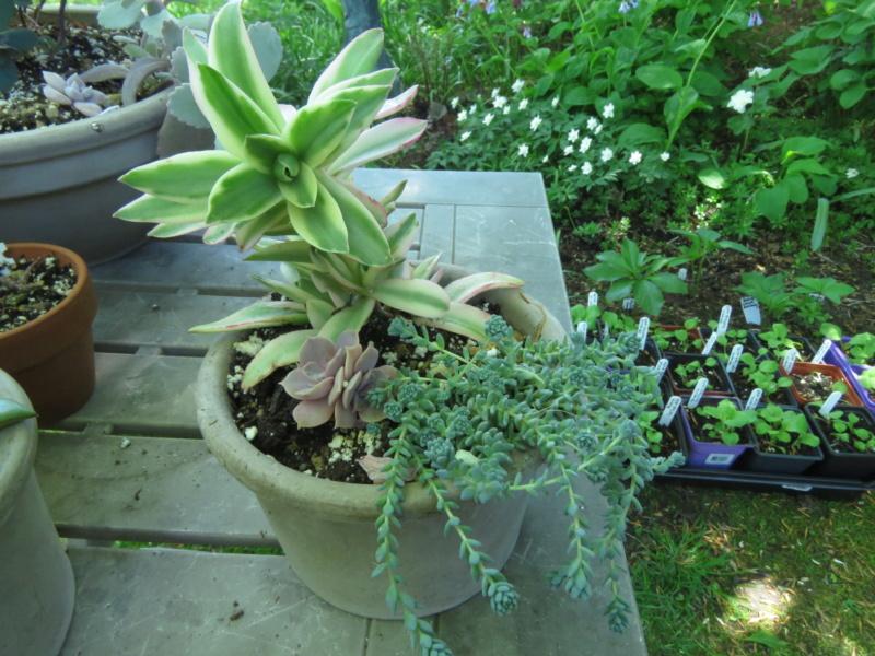 Pots et jardinières 2020 Img_2101