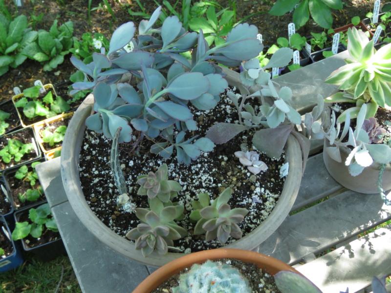 Pots et jardinières 2020 Img_2102