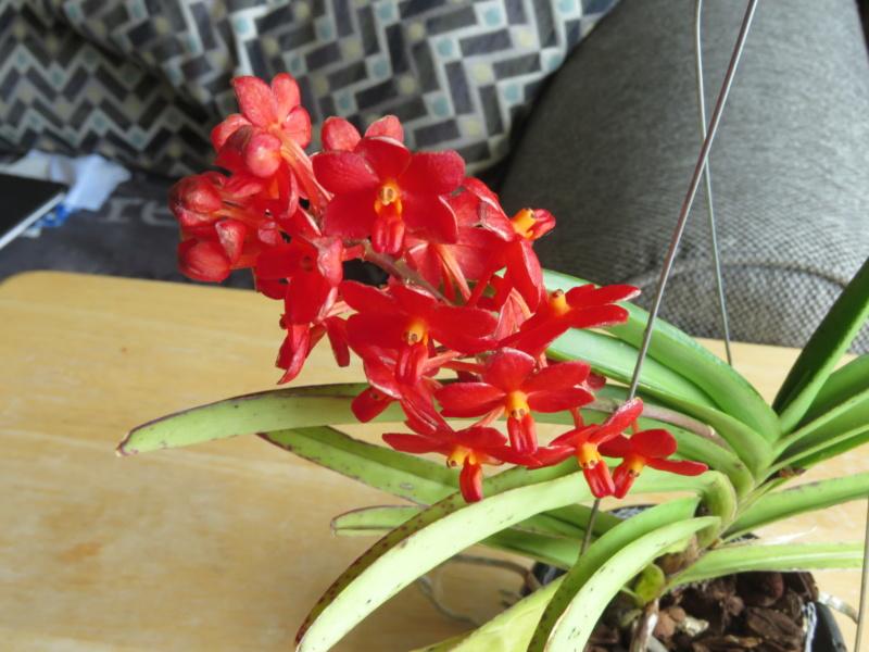 Les orchidées chez Grigri à partir de 2020 - Page 8 Img_2375