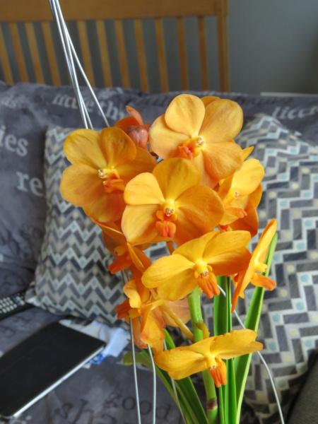 Les orchidées chez Grigri à partir de 2020 - Page 8 Img_2376