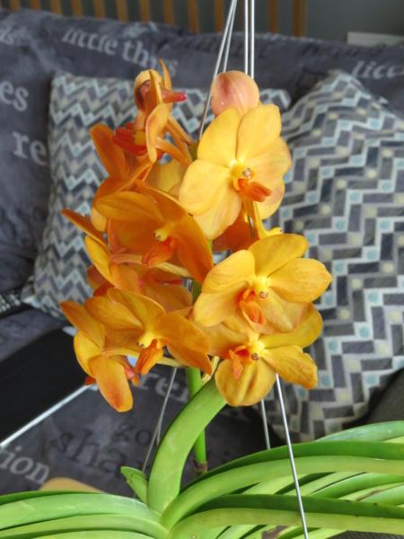 Les orchidées chez Grigri à partir de 2020 - Page 8 Img_2377