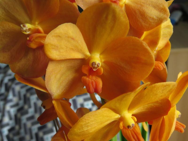 Les orchidées chez Grigri à partir de 2020 - Page 8 Img_2378