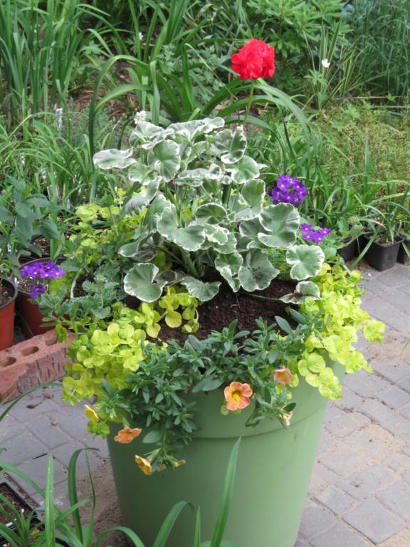 Pots et jardinières 2021 Img_7110