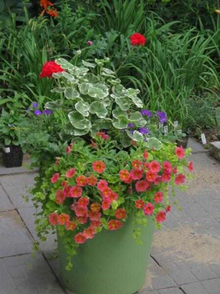 Pots et jardinières 2021 Img_7345