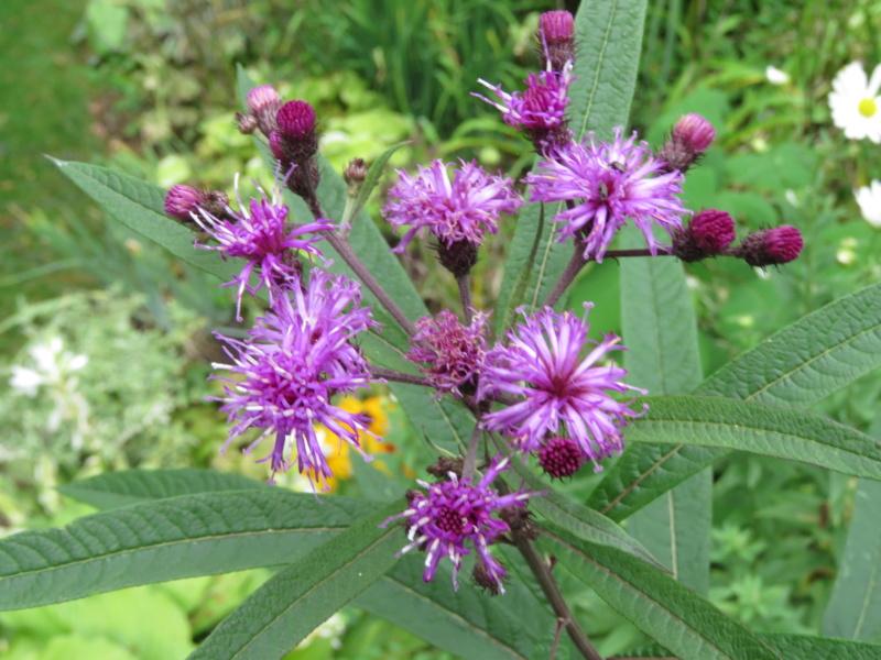 Récolte des semences, plante par plante - Page 5 Img_9049