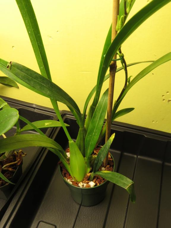 Les orchidées chez Grigri à partir de 2020 - Page 4 Img_9935