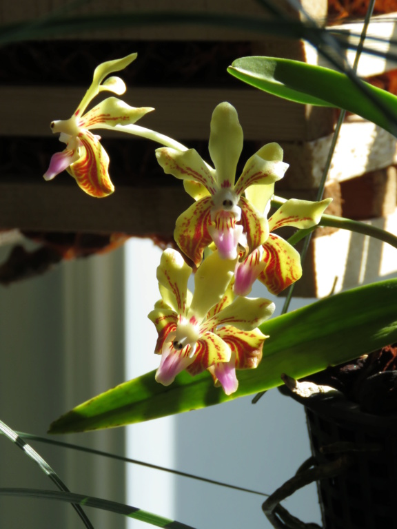 Les orchidées chez Grigri à partir de 2020 - Page 4 Img_9944