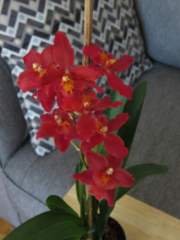 Les orchidées chez Grigri à partir de 2020 - Page 8 Img_9945
