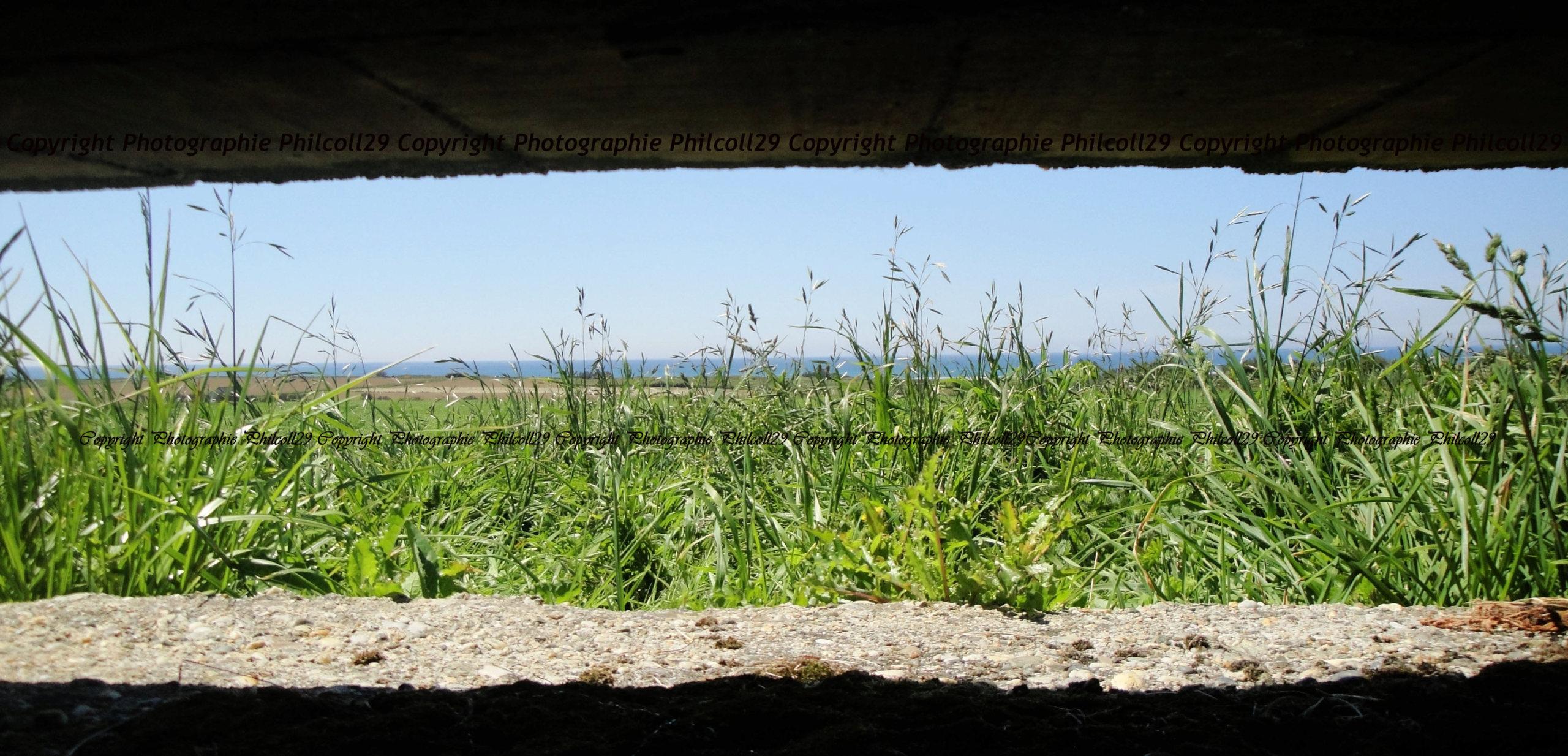 Nature verte Bunker Allemand d'observation  156