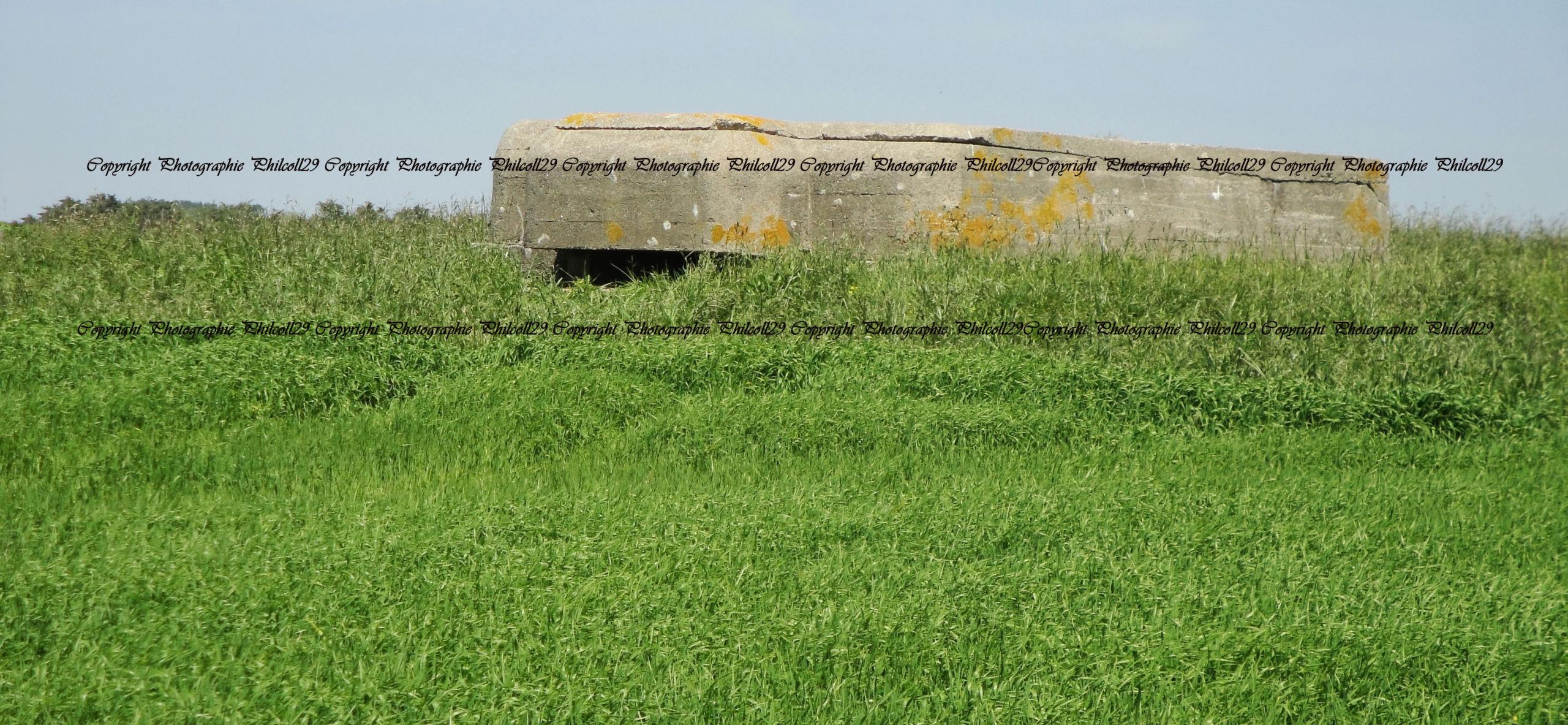 Nature verte Bunker Allemand d'observation  252