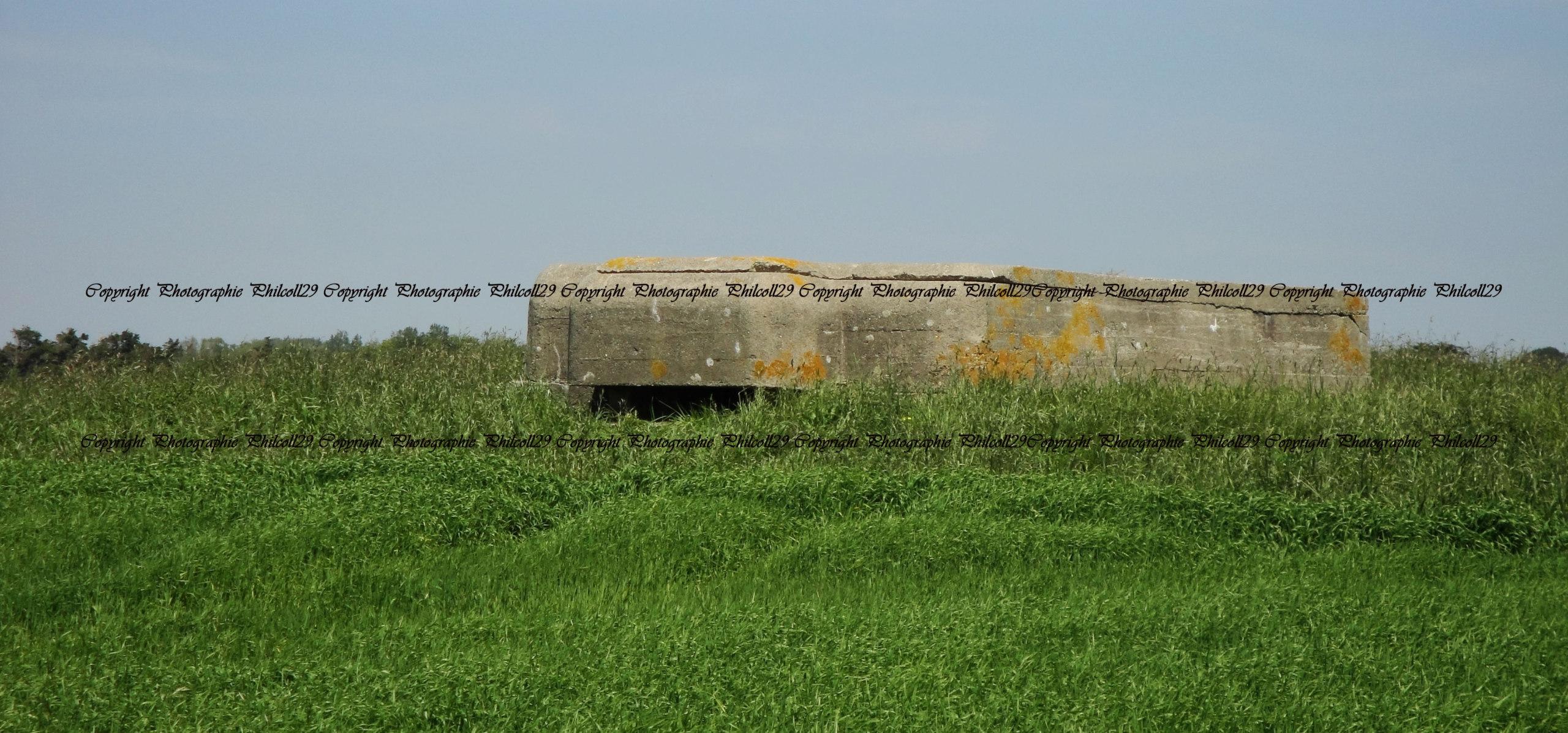 Nature verte Bunker Allemand d'observation  345