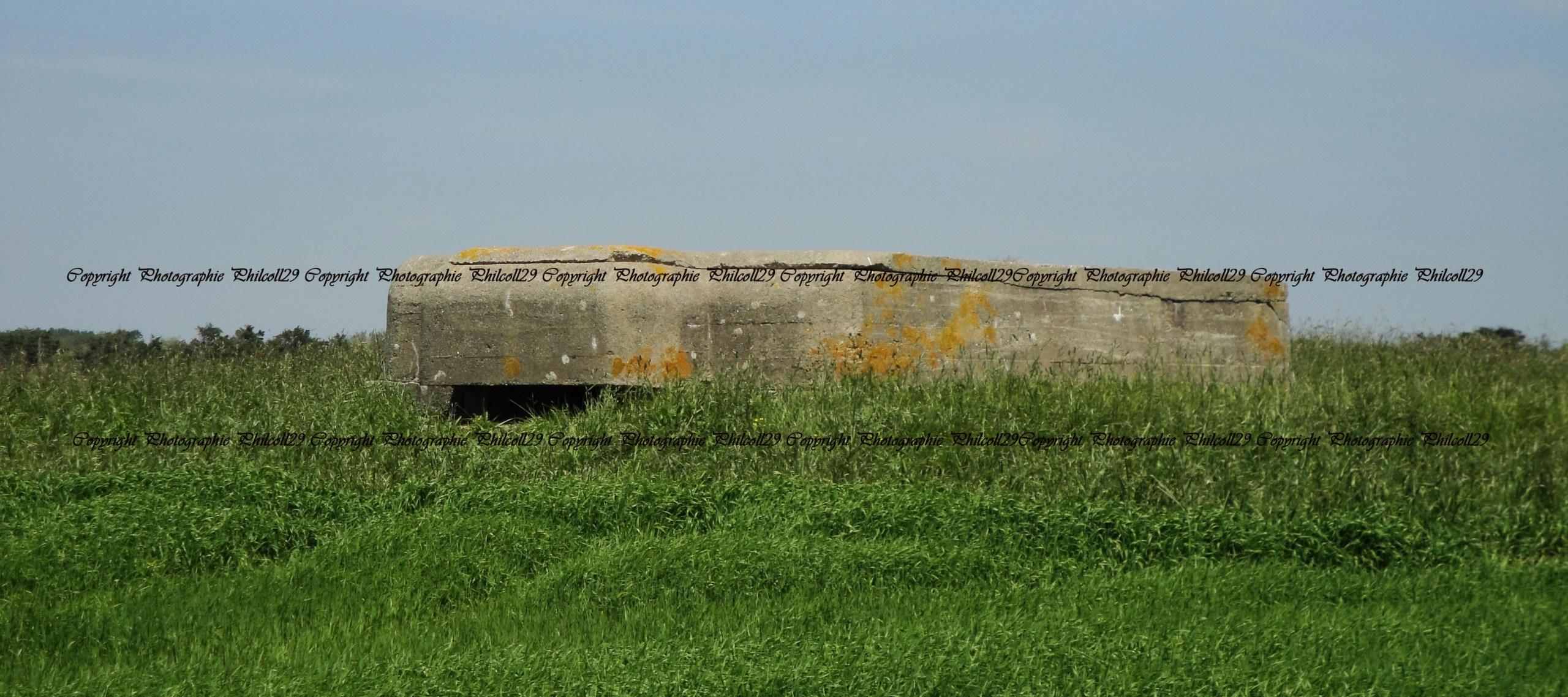 Nature verte Bunker Allemand d'observation  443