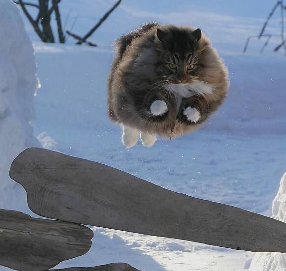 Финские котики пушистики Scree225