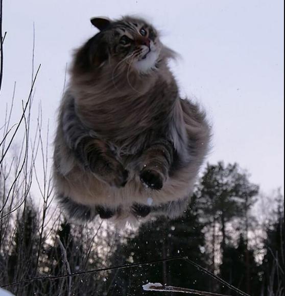 Финские котики пушистики Scree229