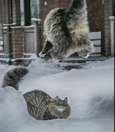 Финские котики пушистики Scree230