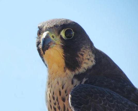 Лесные звери и птицы фото - Страница 4 Scree280