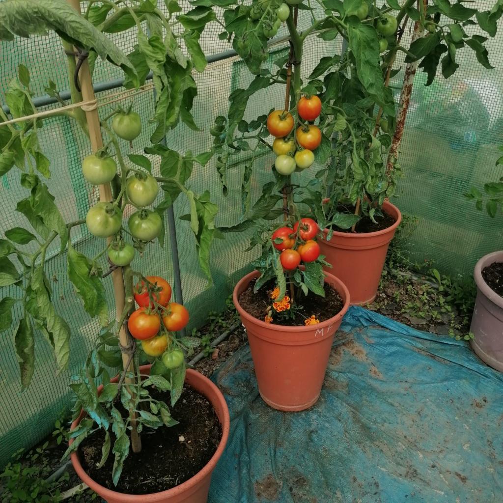 Que se passe t'il au jardin? - Page 13 Img_2095