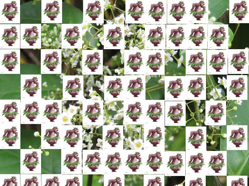 un arbre Martin le 1er Avril 2020 trouvé par Martine - Page 2 Arbre15