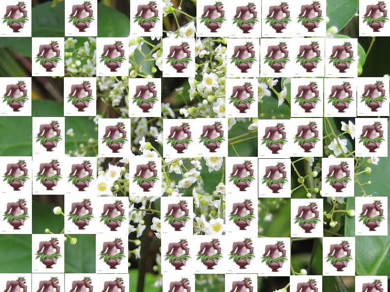 un arbre Martin le 1er Avril 2020 trouvé par Martine - Page 2 Arbre16