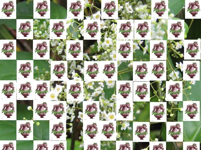un arbre Martin le 1er Avril 2020 trouvé par Martine - Page 2 Arbre17
