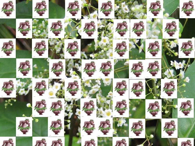 un arbre Martin le 1er Avril 2020 trouvé par Martine - Page 3 Arbre18