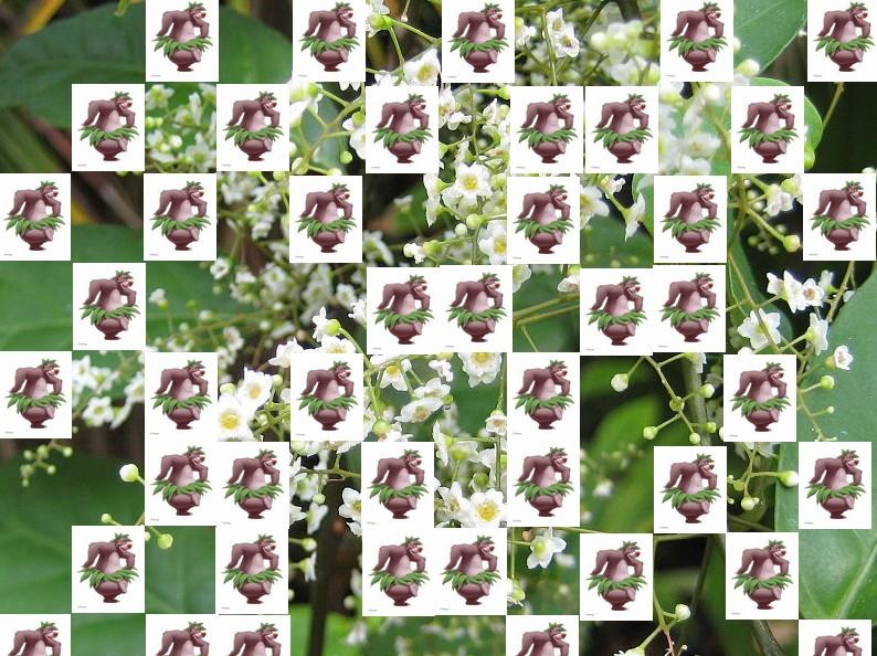 un arbre Martin le 1er Avril 2020 trouvé par Martine - Page 3 Arbre19
