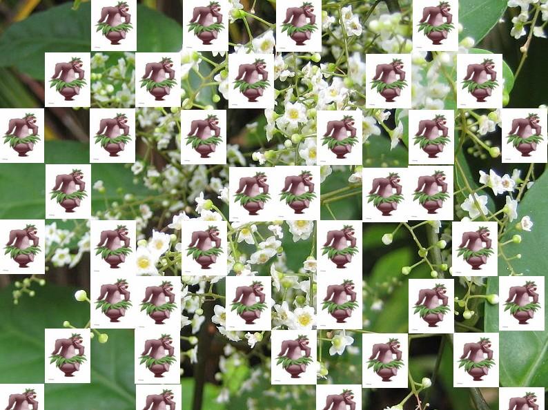 un arbre Martin le 1er Avril 2020 trouvé par Martine - Page 3 Arbre20