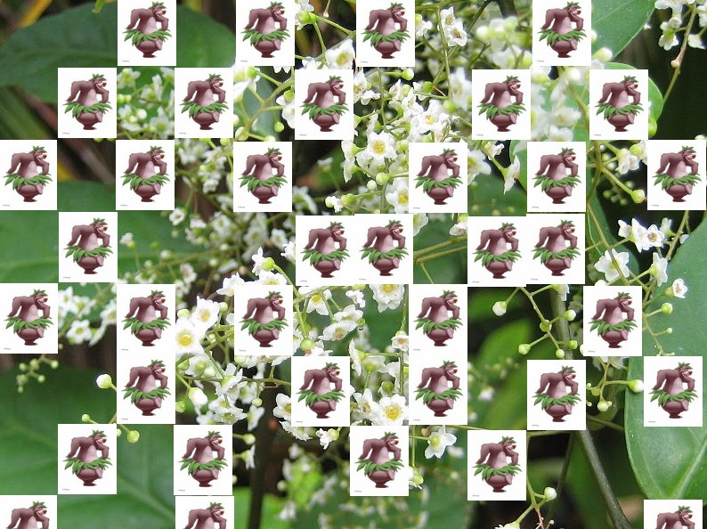 un arbre Martin le 1er Avril 2020 trouvé par Martine - Page 4 Arbre21