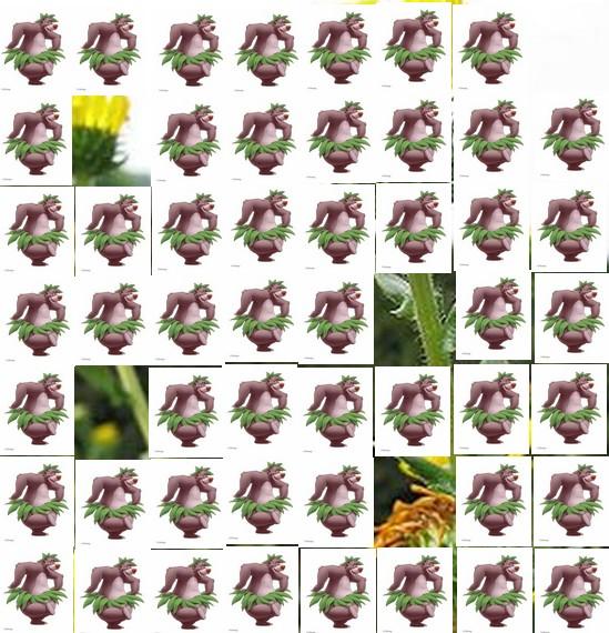 une plante Martin 1er avril trouvée par Jov' Une_pl10