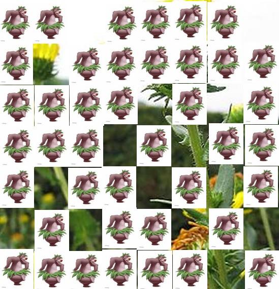 une plante Martin 1er avril trouvée par Jov' Une_pl12