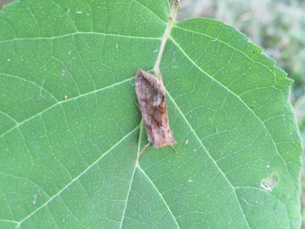étrange insecte inconnu de mon jardin Img_0714