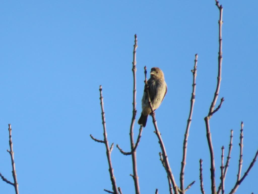 aide pour identifier cet oiseau, merci Img_1410