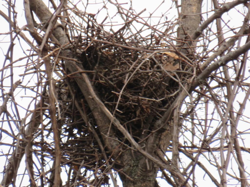 est-ce un nid de buse? Img_2210