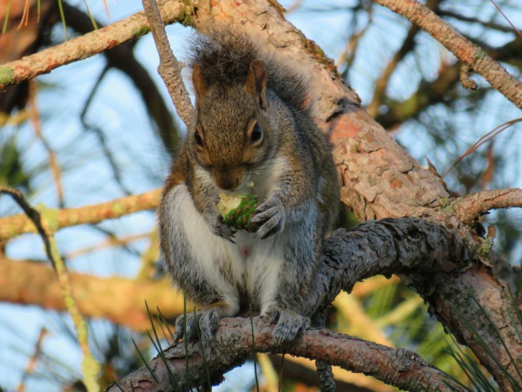 Écureuil au repas Img_2614