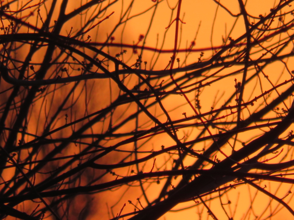 Lever de soleil , un ciel en feu! Lever_21