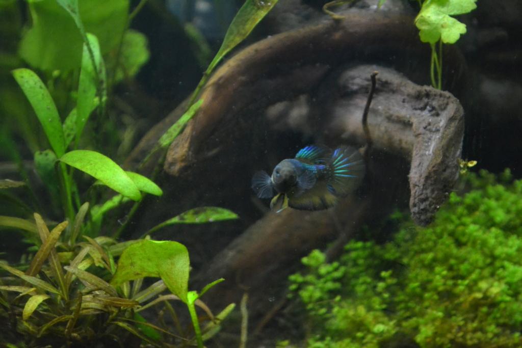la p'tite nouvelle marbré aux yeux bleus.... Dsc_0423