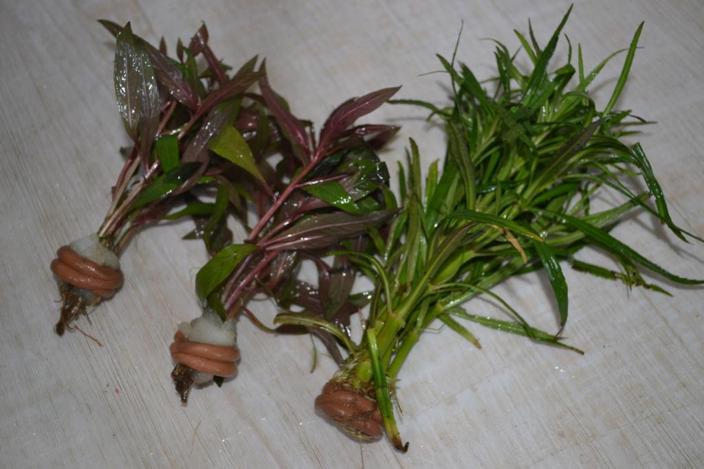 besoin d'identifier 2 plantes :) Dsc_0730