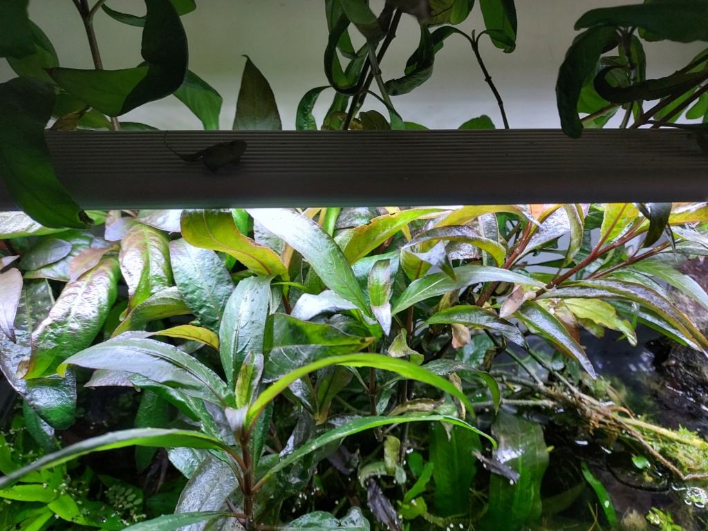 besoin d'identifier 2 plantes :) Plante11