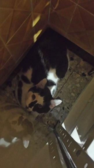 COMETE (chaton noir et blanc) Dsc_0410