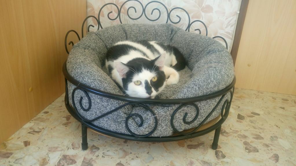 COMETE (chaton noir et blanc) Dsc_0415