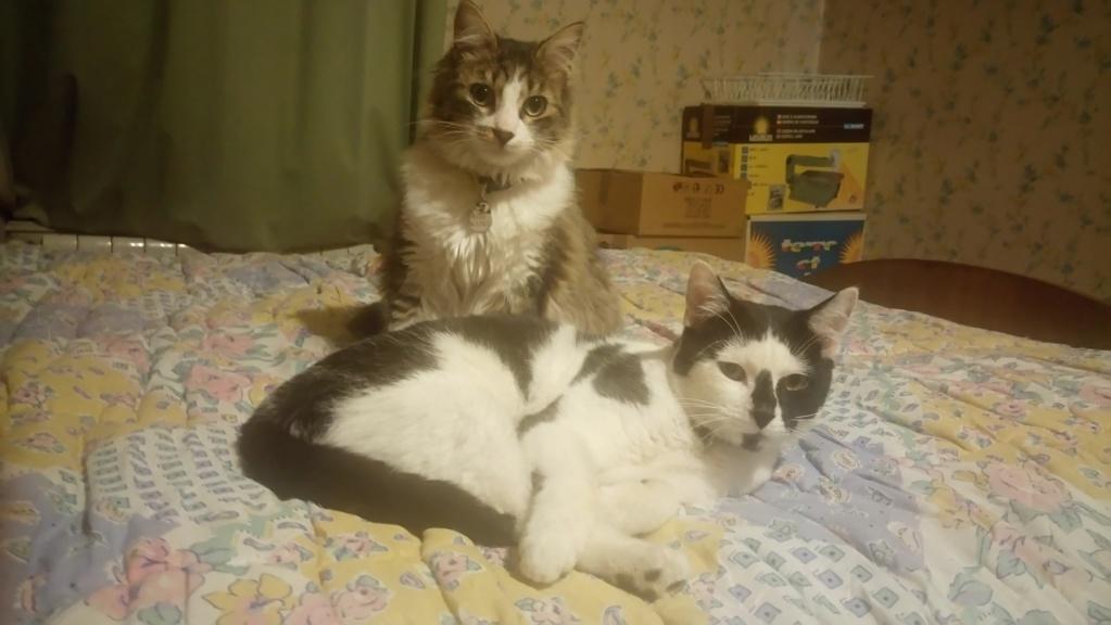 COMETE (chaton noir et blanc) Dsc_0416