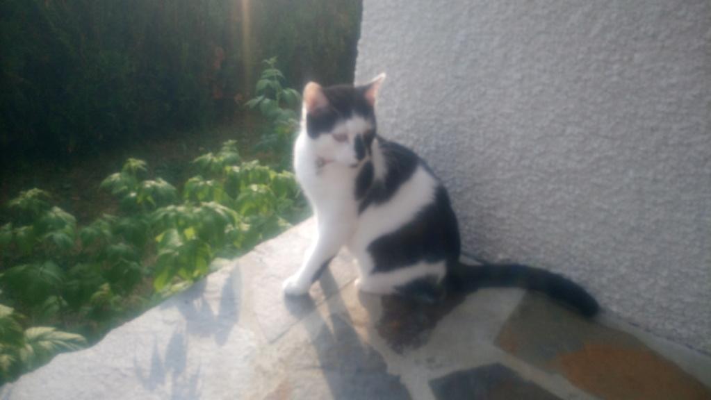 COMETE (chaton noir et blanc) Dsc_0420