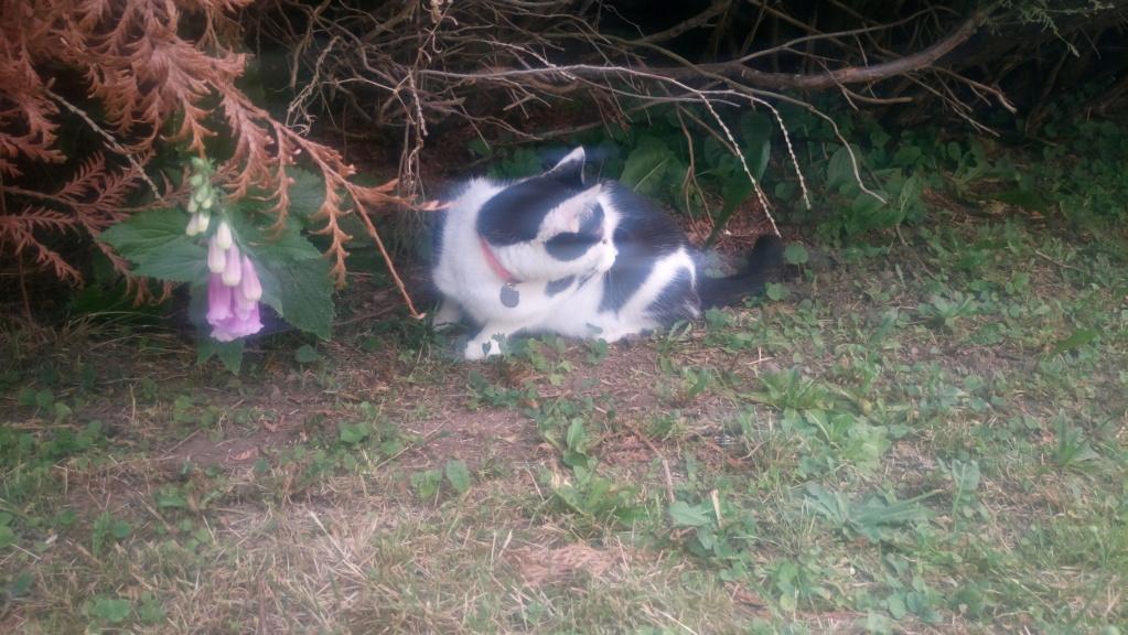COMETE (chaton noir et blanc) Dsc_0422