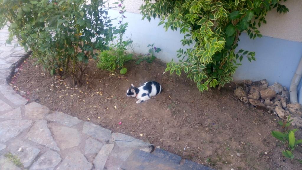 COMETE (chaton noir et blanc) Dsc_0526