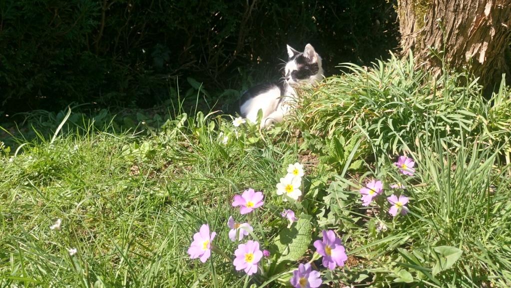 COMETE (chaton noir et blanc) Dsc_0710