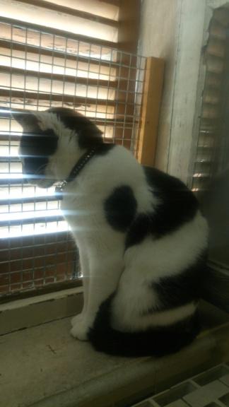COMETE (chaton noir et blanc) Dsc_0811