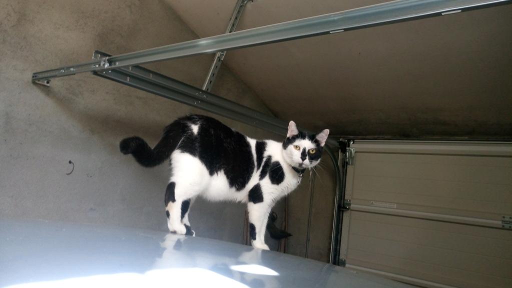 COMETE (chaton noir et blanc) Dsc_0813