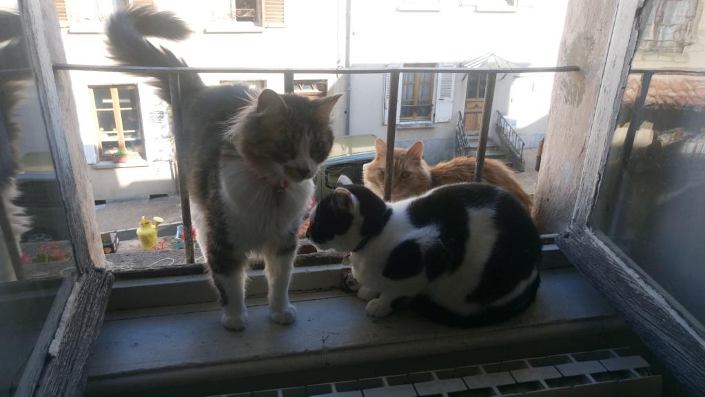 COMETE (chaton noir et blanc) Dsc_0911